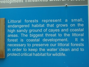 Littoral Forests