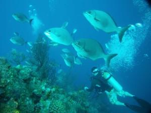 Scuba Diving Pedro's Hotel